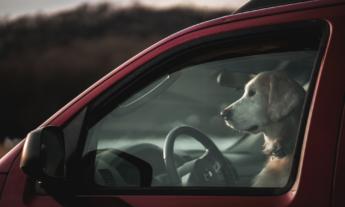 Pets no Veículo Dia Nacional dos Animais